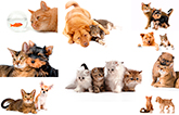 Клипарт Кошки и Собаки
