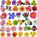 PSD цветы